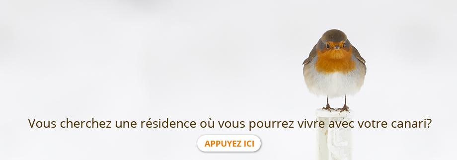 Vous cherchez une résidence où vous pourrez vivre avec votre canari ?