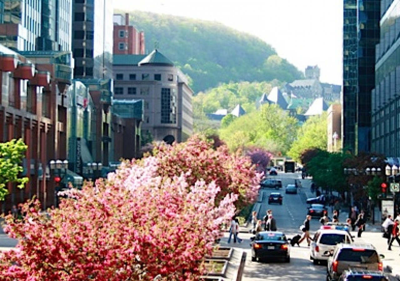 b et c sainte-catherine street with mont royal view