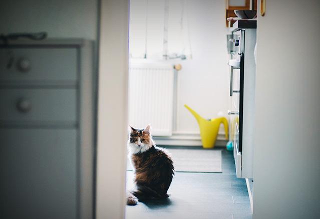 Chat dans la salle de bain d'une habitation neuve de Montréal