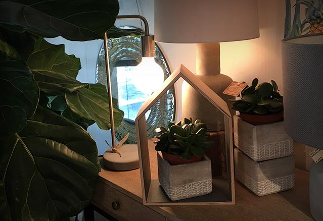 plante de style bohémien sur un meuble