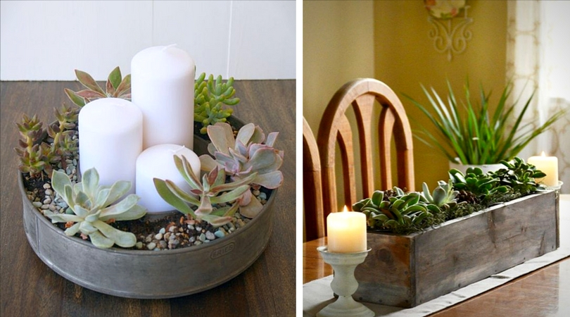 succulentes__centre_de_table