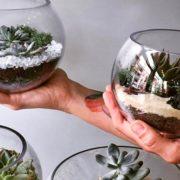 succulentes__bloma