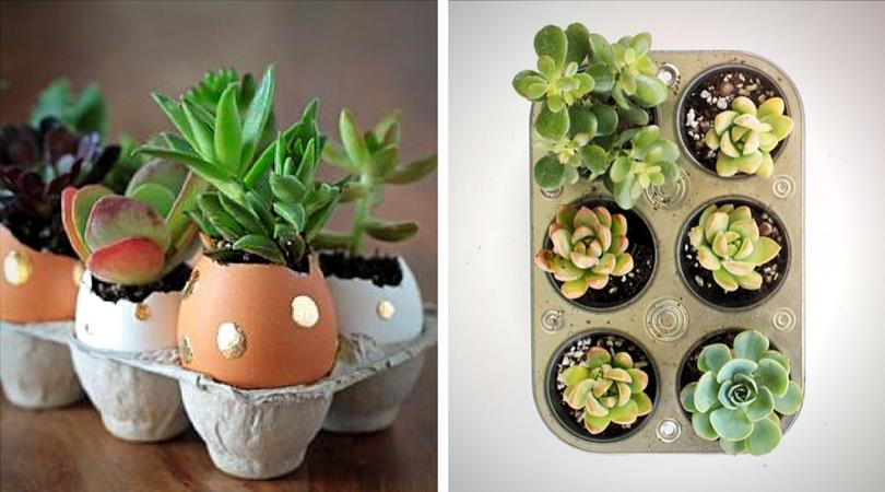succulentes__oeuf_pan