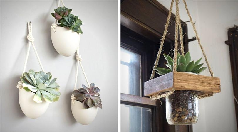 succulentes__suspendues