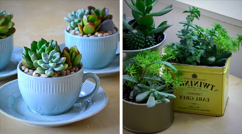 succulentes__tasse_the