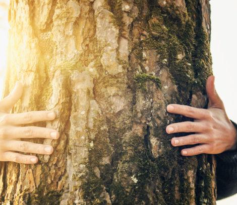 Havre des pins arbre coopréatif