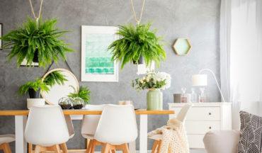 les vertus des plantes d'intérieur