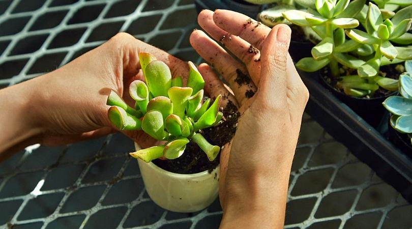les plantes d'intérieur c'est bon pour le moral