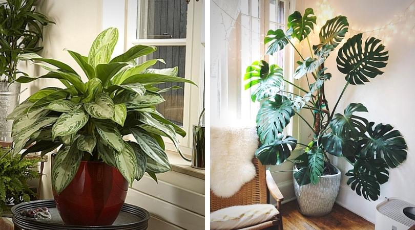 vertus des plantes d'intérieur acoustique devant une fenêtre