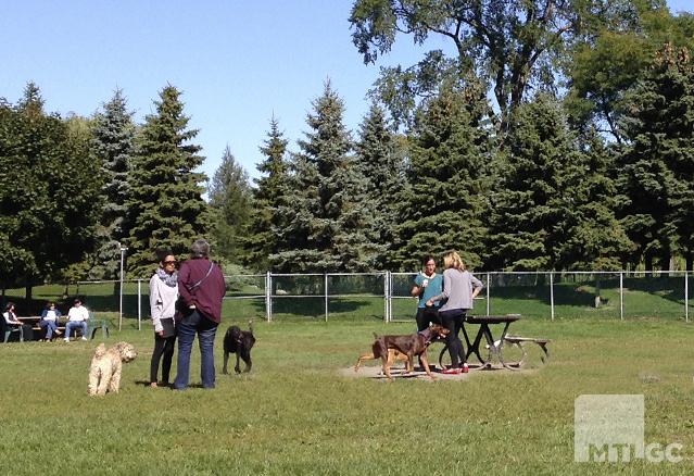 Un parc à chien permet à son maître et au chien de mieux se connaître.